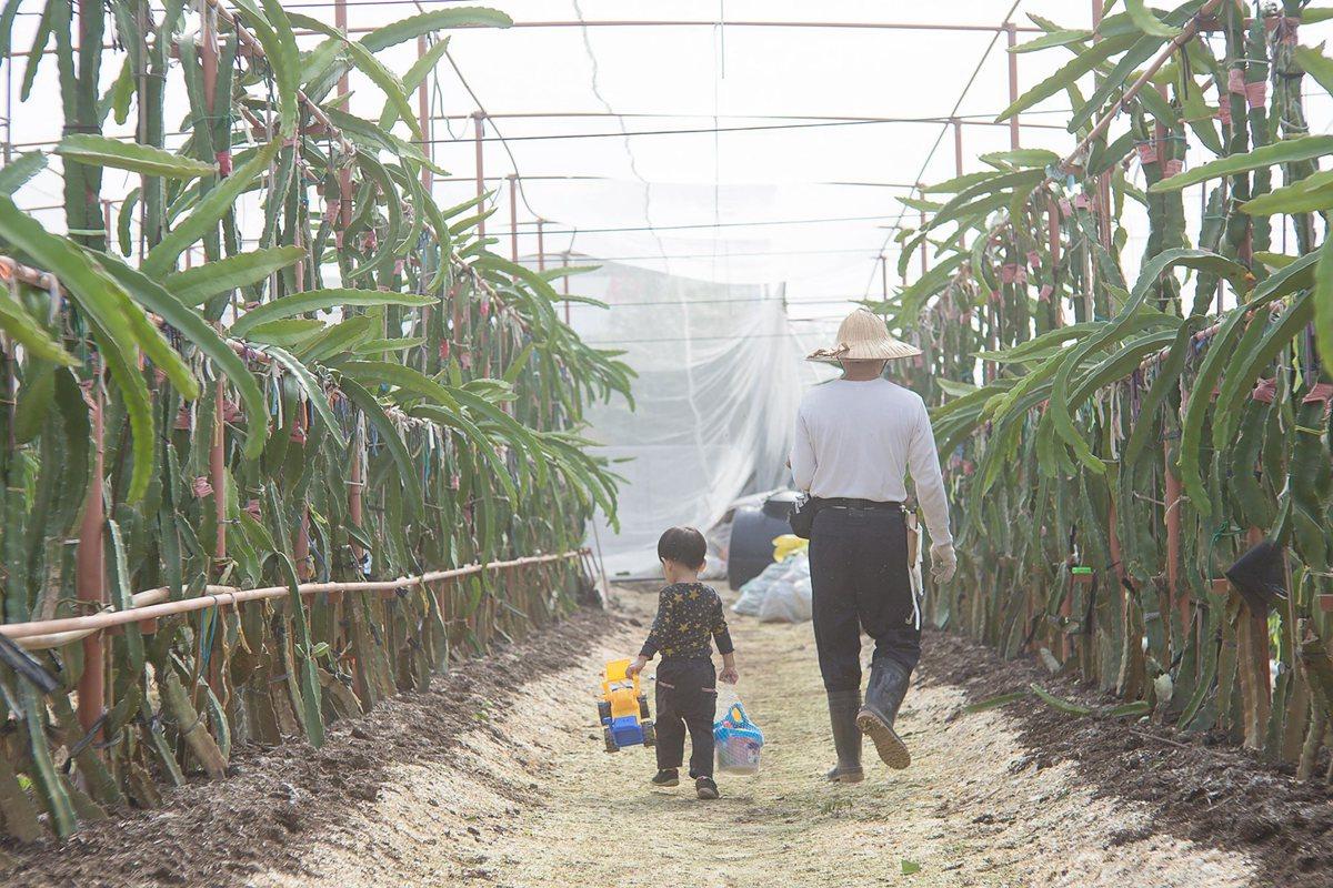 台灣在地農產│用好年小農火龍果,開啟甜在心美好一天