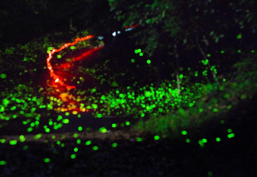 4/21-5/6台南賞螢季 | 隱身山林的精靈,南搞帶妳一窺螢光點點!