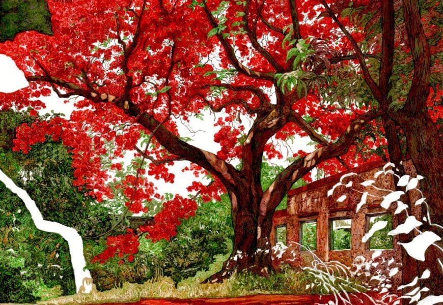 鳳凰木  短暫的綻放,漫長的等待:番茄倉庫的 鳳凰木
