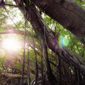 安平樹屋   絕美必訪!在都市拍出森林秘境感!